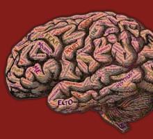 Teaching Brain, Learning Brain. La ricerca sulla Neurodidattica.