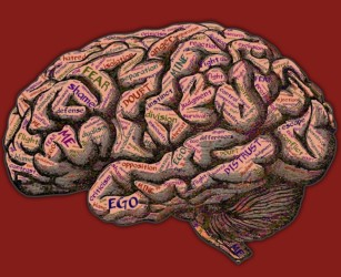 Teaching Brain, Learning Brain. La ricerca sulla Neurodidattica.