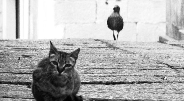 """[Dida-kit] Recensione """"La gabbianella e il gatto"""""""